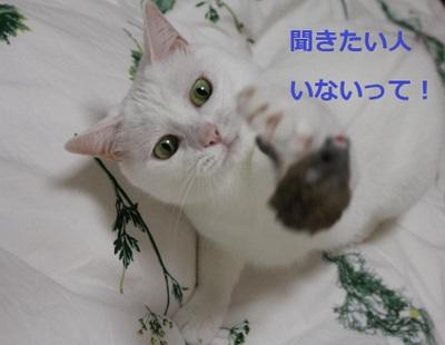 Img_4487_convert_20110816071146
