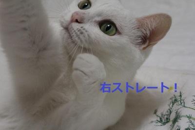 Img_4829_convert_20110821134805