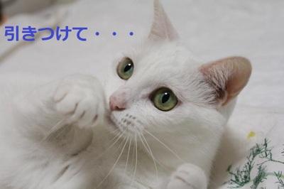 Img_4830_convert_20110821134908