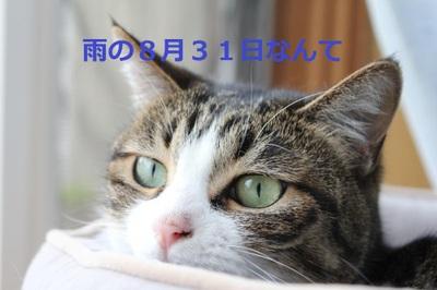 Img_6480_convert_20110831160550