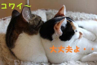 Img_0607_convert_20111115200532