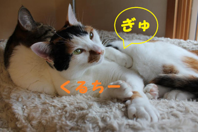Img_0601_convert_20111116082317