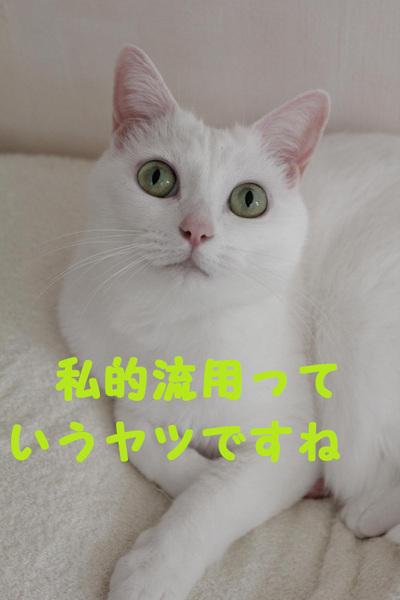 Img_0923_convert_20111122053013