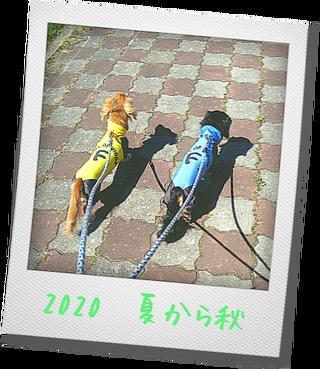 Photo_20200920113201